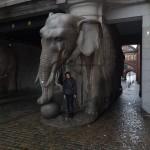 Carlsberg Elephant!